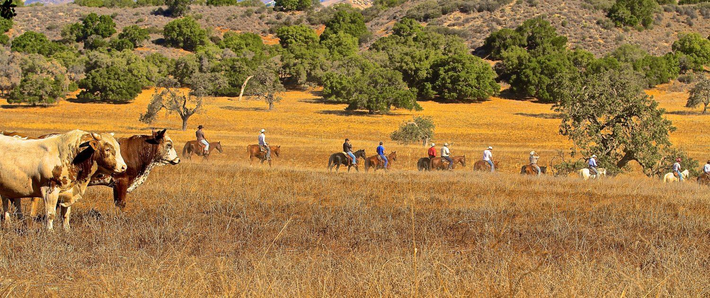 Horses For sale by Diamond J Horses: Ranch & Trail Quarter