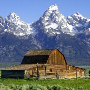 Horses For Sale Jackson Hole Wyoming