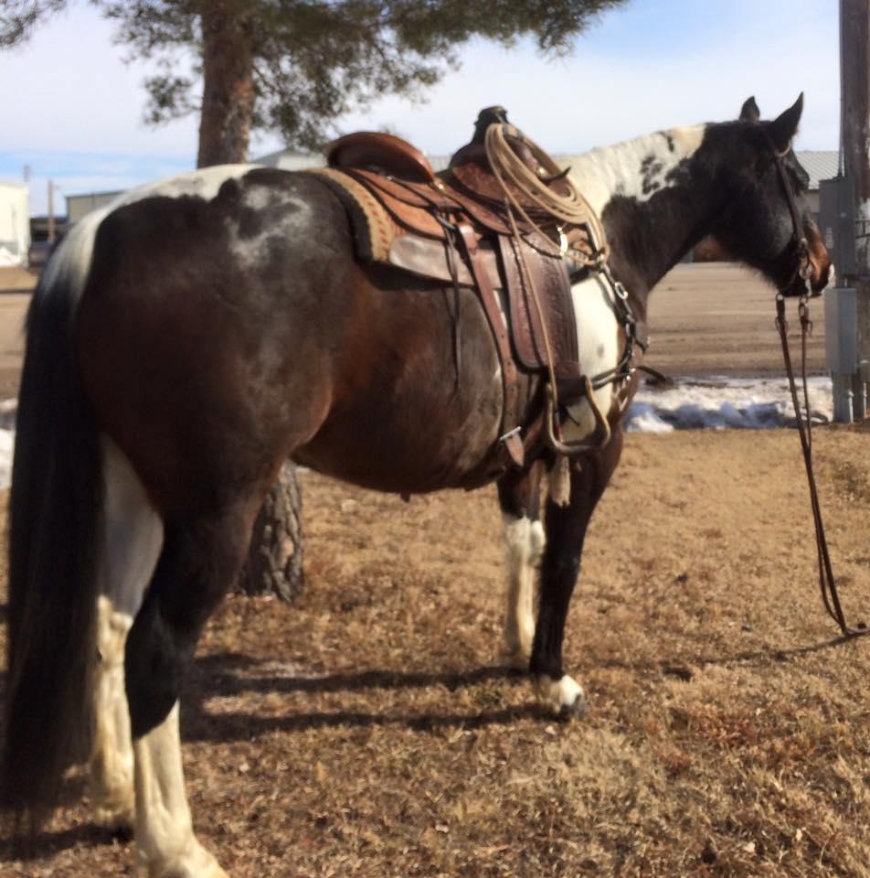 black white and brown paint horses best image konpax 2018 Rolex Watch Replacement Parts Rolex 1560 Parts List